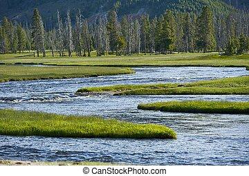 Yellowstone Wilderness