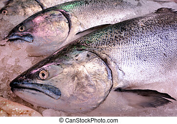 Yellowtail amberjack Kingfish on display in fish market -...
