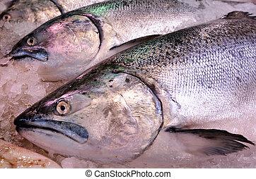 Yellowtail amberjack Kingfish on display in fish market - ...