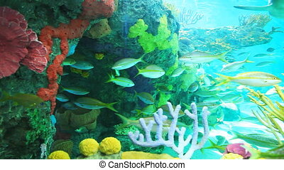 Yellowtailed Snapper with other tropical fish swimming in a coral reef