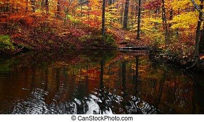 Yellowwood Forest Reflection Loop