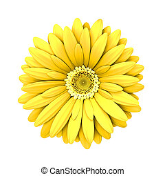 Yelow daisy flower isolated - 3d render