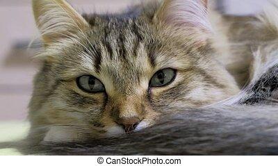 yeux, macro, chaton, figure, vert, hunter., closeup.