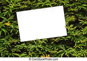 yew tree topiary border - Topiary bush frame or hedge border...