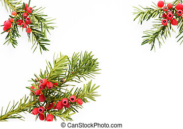 Yew twigs with fruits
