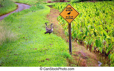 Two Nene birds stand close to a sign that asks travelers to slow down for wildlife crossing. A curving road sits at side of image