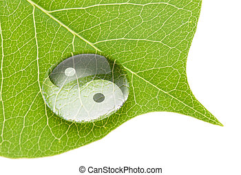 Yin yang symbol on water drop on fresh green leaf