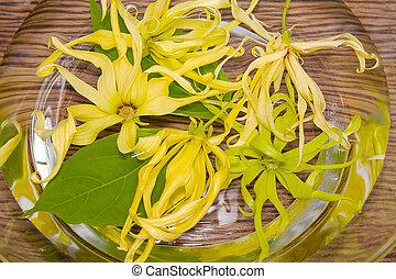ylang-ylang, acqua, fiore, terme giorno