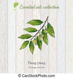 Ylang-ylang essential oil label. Vector illustration