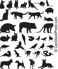 yndling, dyr