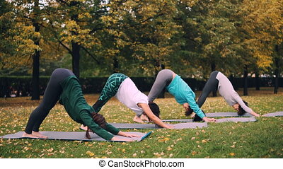 Yoga class is doing stretching exercises in park enjoying...