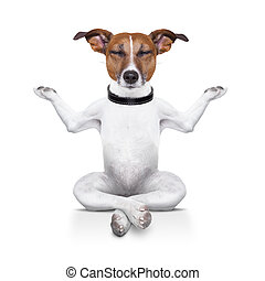 yoga dog sitting relaxed with closed eyes