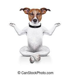 yoga, hund