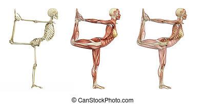 yoga színlel, -, anatómiai, táncos, overlays
