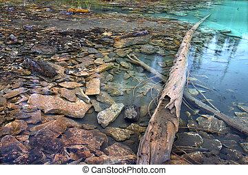 Yoho National Park Pond
