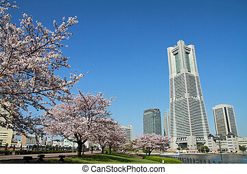 Yokohama Landmark Tower and the cherry blossoms in Japan