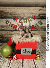 Puppies on a Christmas Themed Background