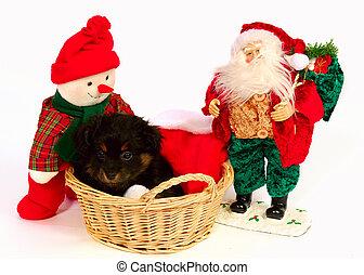 Yorkipoo Puppy Christmas Theme