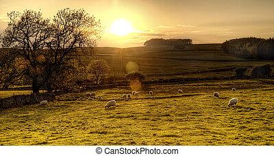 Die Dales von Yorkshire