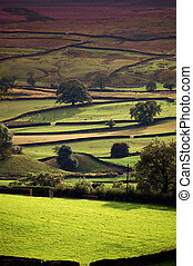 Yorkshire dales in evening sunlight