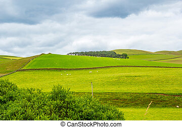Yorkshire Dales, landscape in Summer, England, United Kingdom