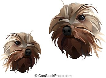 Yorkshire Dog Vector Lines Illustration Isolated