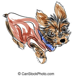 Yorkshire Terrier - An image of a teacup yorkshire terrier...