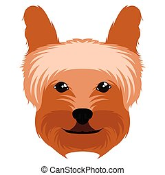 Yorkshire terrier avatar - Isolated avatar of a yorkshire...