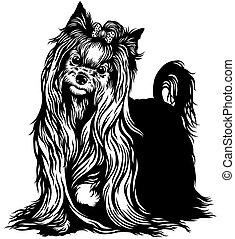yorkshire terrier black white
