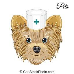 Yorkshire terrier dog doctor