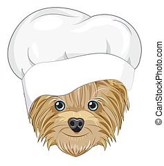 Yorkshire terrier dog in cook cap