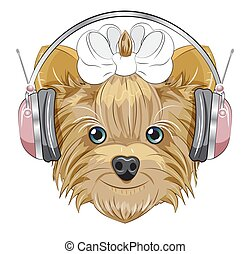 Yorkshire terrier dog in headphones