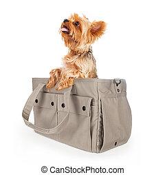 Yorkshire Terrier Dog in Travel Bag