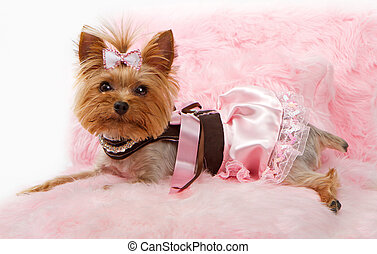 Yorkshire Terrier Dog on a Luxury Pink Bed - A beautiful...