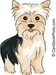 Yorkshire Terrier - Illustration Featuring a Yorkshire...