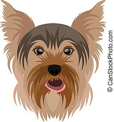 Yorkshire Terrier - illustration