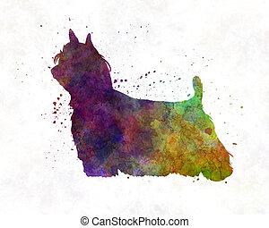 Yorkshire Terrier Long Hair in watercolor