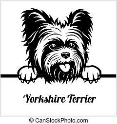Yorkshire Terrier - Peeking Dogs - - breed face head...