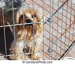 Yorkshire Terrier - Yorkshire terrier dog in a wire...