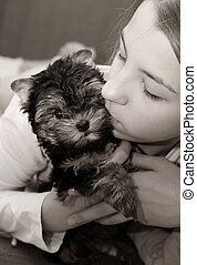 Yorkshire terrier - The girl embraces the puppy of the...
