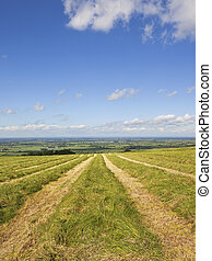 yorkshire wolds hay field