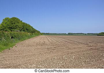 yorkshire wolds potato field