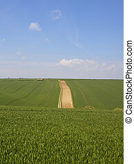 Yorkshire Wolds rolling wheat crops