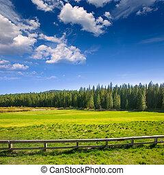 Yosemite meadows and forest in California - Yosemite green...