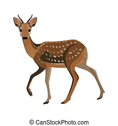 Younf deer with short horns and brown fluffy fur - Young...