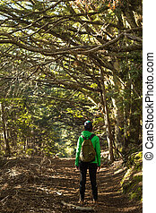 young adult woman walking in beech forest