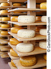 Young and matured cheese-wheels on shelves
