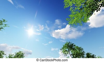 Young ash tree, nature Fraxinus, animation