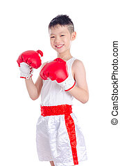 boxer isolated over white background