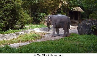 "Young Asian Elephant at the Zoo - ""Young asian elephant..."